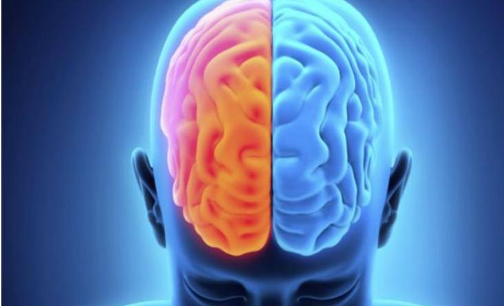 La dominancias de los hemisferios cerebrales y su correlación con el trabajo